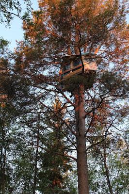 Ağaç üzerindeki baraka