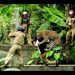 İnsan Yayılmacılığına Karşı Hayvan Direnişi Sürüyor