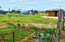 Mel Gurr: Brezilya'da Toprak Adalet(siz)liği
