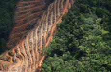 Muzomuhle Ntuli: Eko-Marksizm ve Ormansızlaştırma
